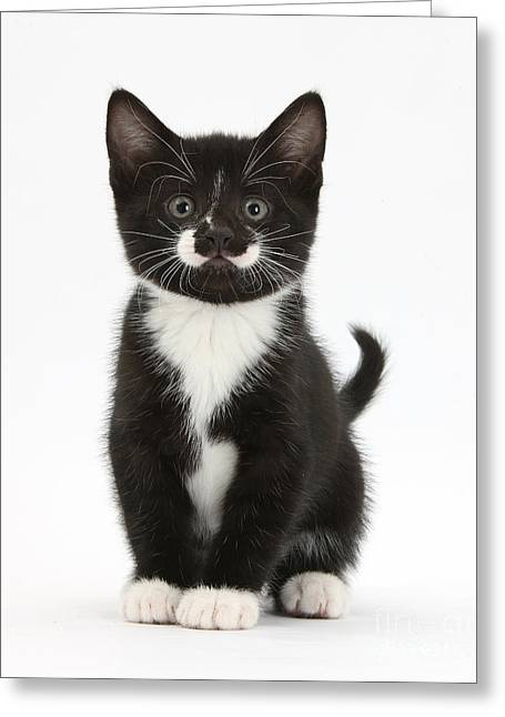 Tuxedo Greeting Cards - Kitten Greeting Card by Mark Taylor
