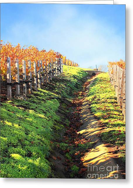 Late Autumn In Napa Valley Greeting Card by Ellen Cotton