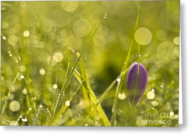 Light Flowers Greeting Card by Odon Czintos