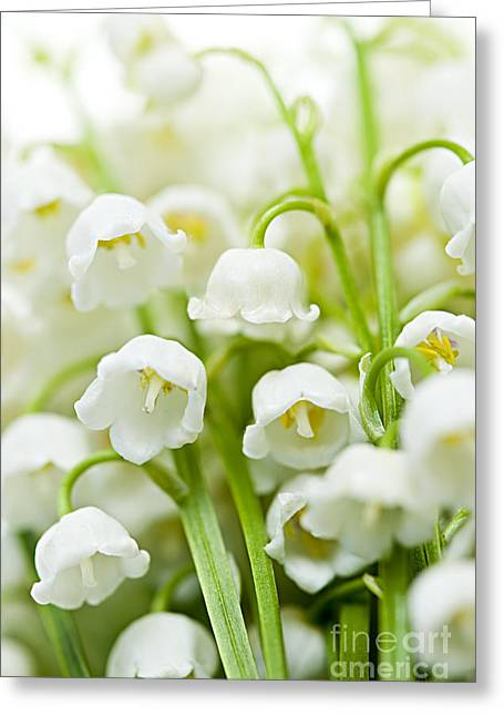 Many Greeting Cards - Lily-of-the-valley flowers Greeting Card by Elena Elisseeva