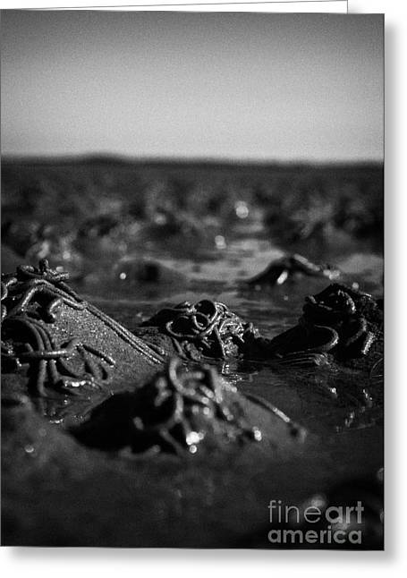 Flooding Greeting Cards - Lugworm Arenicola Marina Casts On Mudflats In Strangford Lough County Down Northern Ireland Greeting Card by Joe Fox