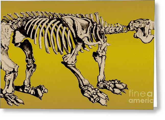 Fossil Art Greeting Cards - Megatherium, Extinct Ground Sloth Greeting Card by Science Source