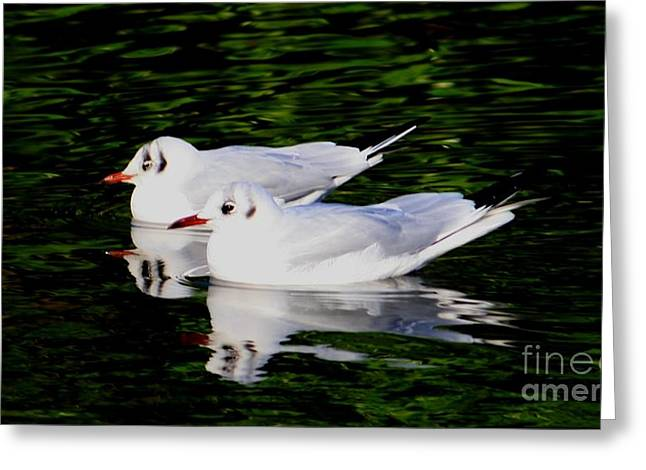 Reflection In Water Greeting Cards - Mirror Of Beauty Greeting Card by Valia Bradshaw