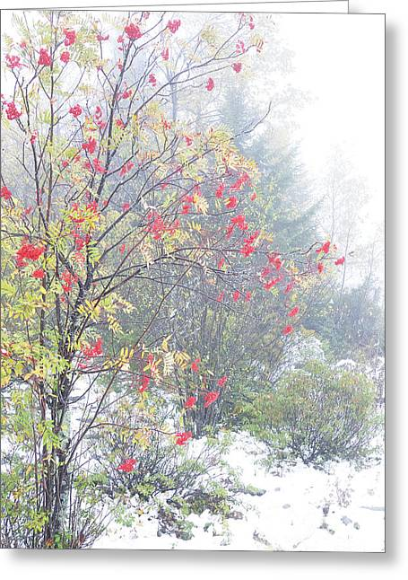 West Virginia Highlands Greeting Cards - Mountain Ash and Snow  Greeting Card by Thomas R Fletcher