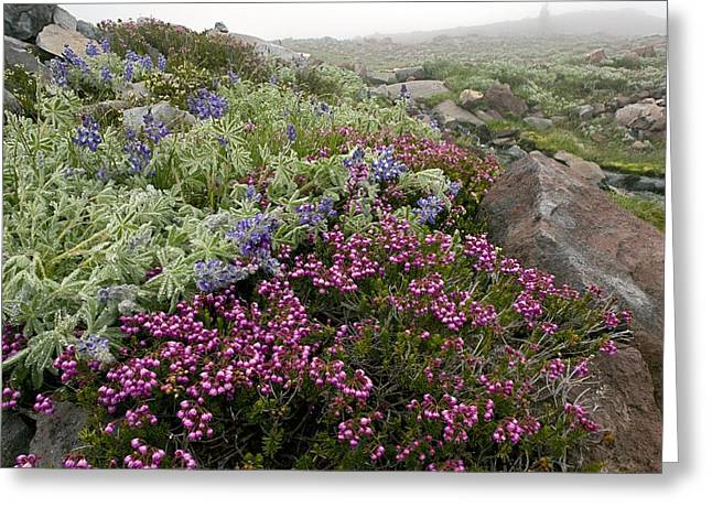 Dewdrops Greeting Cards - Mountain Heathland Greeting Card by Bob Gibbons