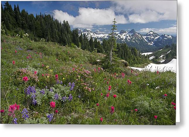 Snow Seeds Greeting Cards - Mountain Meadow Greeting Card by Bob Gibbons