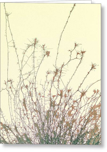 Treatment Greeting Cards - Nerve Cell Culture, Sem Greeting Card by Steve Gschmeissner