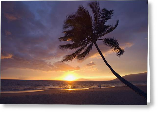 Hawaii Dog Photo Greeting Cards - Palm At Sunset Greeting Card by Ron Dahlquist - Printscapes