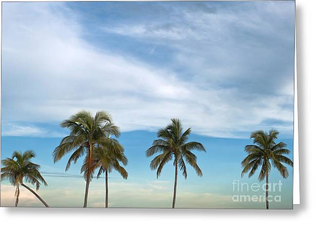 Tropical Plants Greeting Cards - Palm trees Greeting Card by Blink Images