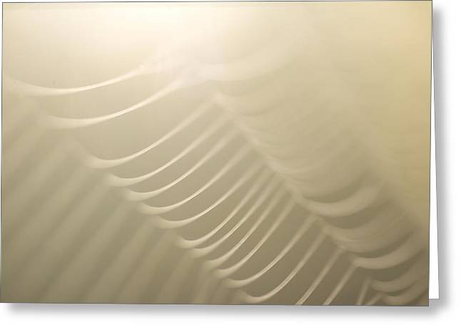 Spun Web Greeting Cards - Part Of A Spider Web Shows Greeting Card by Phil Schermeister