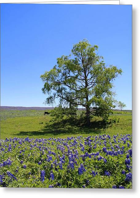 Wild Flowers Of Texas Greeting Cards - Pastures of Blue Greeting Card by Lynnette Johns