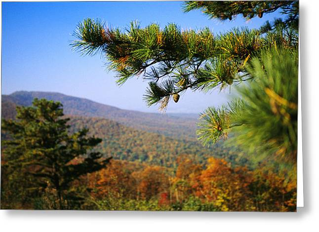 Plant Color Changes Greeting Cards - Pine Tree And Forested Ridges Greeting Card by Raymond Gehman
