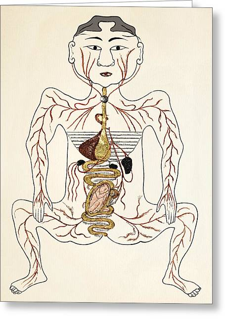 Pregnancy Greeting Cards - Pregnancy Anatomy, 15th Century Artwork Greeting Card by Sheila Terry