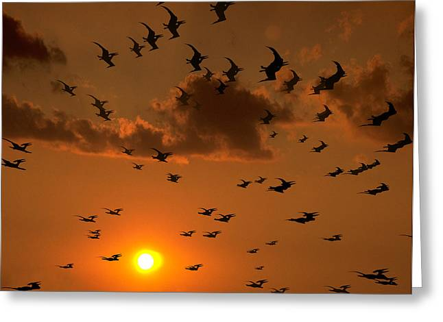 Pterosaur Greeting Cards - Pterosaurs Greeting Card by Christian Darkin