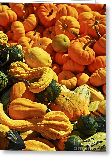 Mini Photographs Greeting Cards - Pumpkins and gourds Greeting Card by Elena Elisseeva