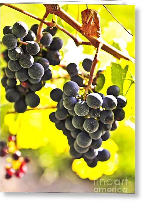 Cabernet Greeting Cards - Red grapes Greeting Card by Elena Elisseeva