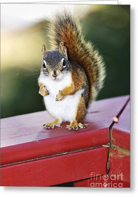 Chubby Greeting Cards - Red squirrel on railing Greeting Card by Elena Elisseeva