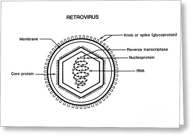 Retrovirus Greeting Cards - Retrovirus Greeting Card by Science Source