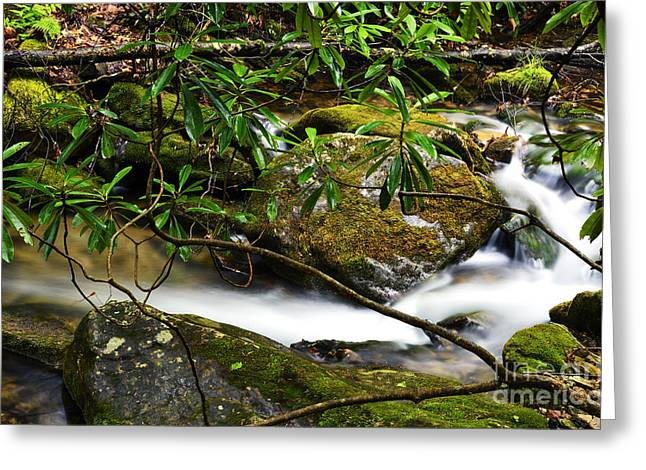 Rhododendron Maximum Greeting Cards - Rhododendron and Waterfall Greeting Card by Thomas R Fletcher