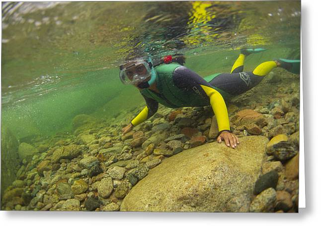 Snorkelling Greeting Cards - River Snorkelling Greeting Card by Alexis Rosenfeld
