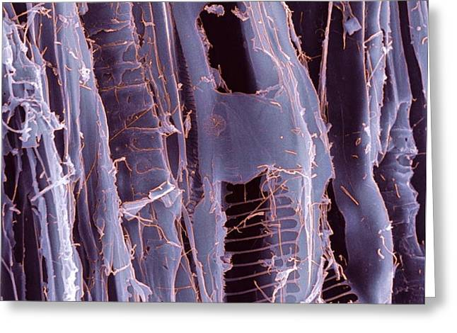 Rotten Wood, Sem Greeting Card by Dr Jeremy Burgess