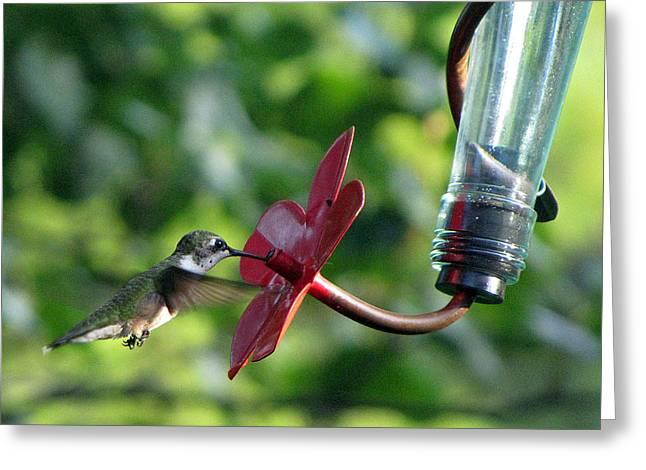 Feeding Birds Pyrography Greeting Cards - Ruby-throated hummingbird Greeting Card by Richard Nickson