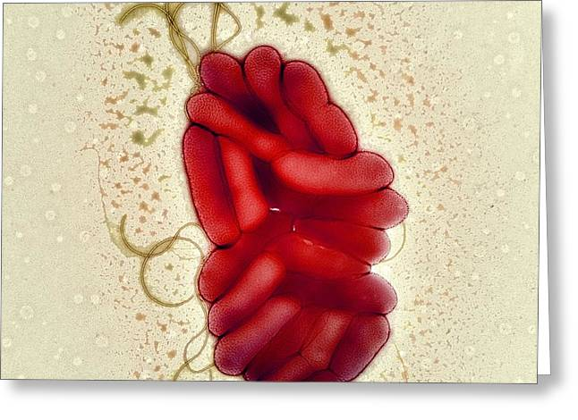 S. Maltophilia Bacteria, Tem Greeting Card by Centre For Infectionshealth Protection Agency
