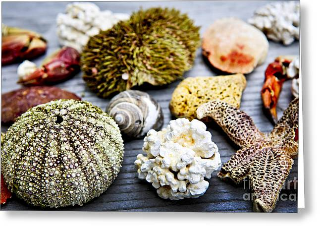 Treasures Greeting Cards - Sea treasures Greeting Card by Elena Elisseeva