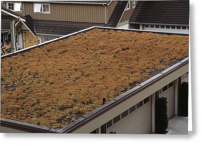 Roof Covering Greeting Cards - Sedum Green Roof Greeting Card by Alan Sirulnikoff