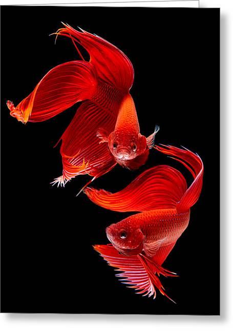 Betta Greeting Cards - Siamese Fish Greeting Card by Subpong Ittitanakul