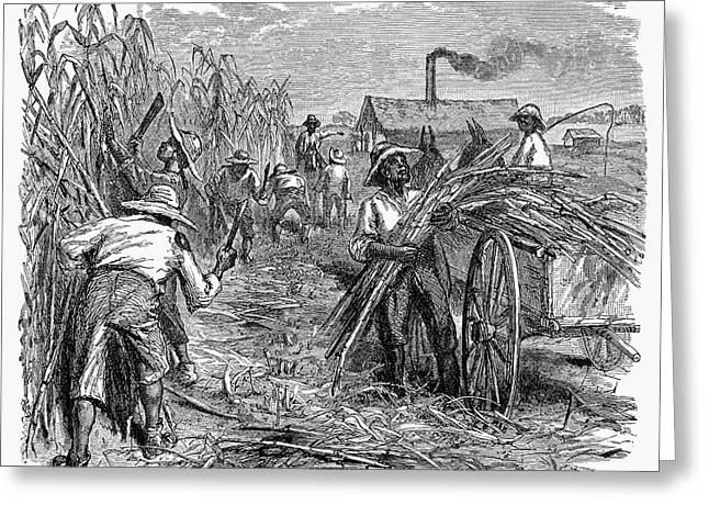 Machete Greeting Cards - Slavery: Sugar Plantation Greeting Card by Granger