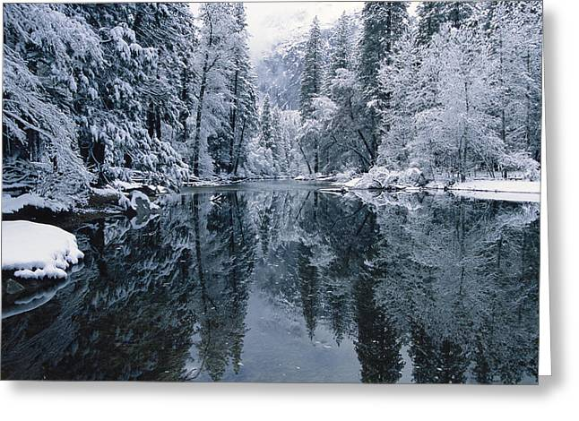 Woodland Scenes Greeting Cards - Snow-covered Trees Reflected Greeting Card by Marc Moritsch