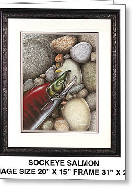 Bobber Greeting Cards - Sockeye Salmon Greeting Card by JQ Licensing