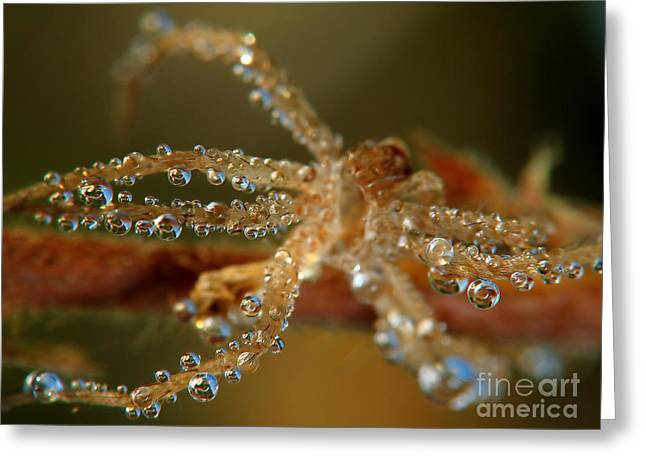 Sweating Greeting Cards - Spider Greeting Card by Odon Czintos