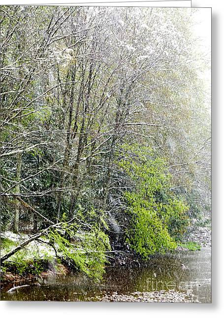 Unnatural Greeting Cards - Spring Snow along Williams River Greeting Card by Thomas R Fletcher