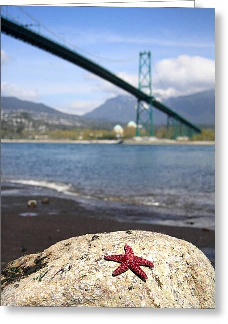 North Vancouver Greeting Cards - Starfish Stanley park Vancouver Greeting Card by Pierre Leclerc Photography