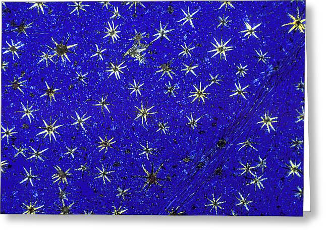Stellate Leaf Hairs, Light Micrograph Greeting Card by Dr Keith Wheeler