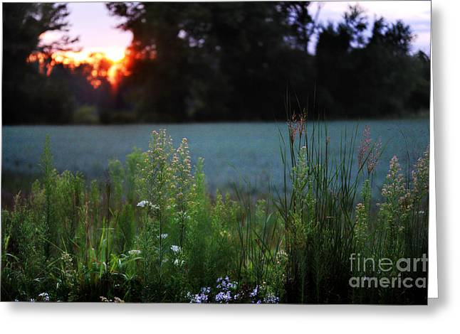 Grassy Field Greeting Cards - Sunrise Greeting Card by HD Connelly