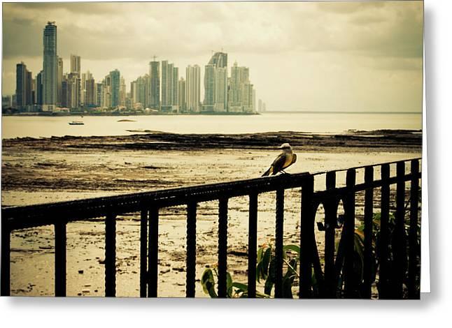 Panama Greeting Cards - Sunset in Panama Greeting Card by Iris Greenwell