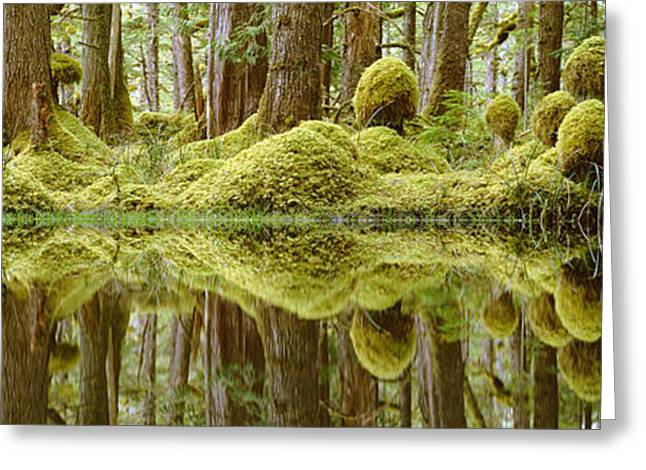 Aquatic Greeting Cards - Swamp Greeting Card by David Nunuk