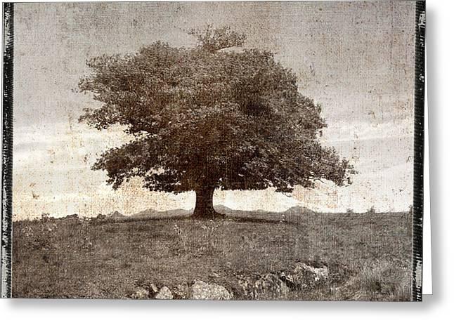 Texture Greeting Cards - Textured tree Greeting Card by Bernard Jaubert