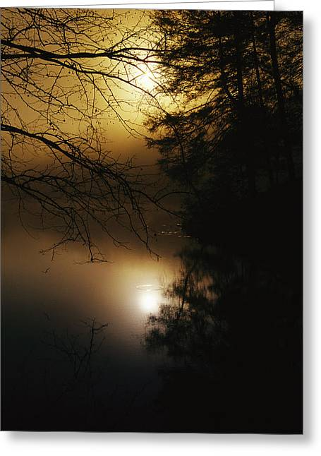 Tree. Sycamore Greeting Cards - The Morning Sun Is Reflected On Otter Greeting Card by Raymond Gehman