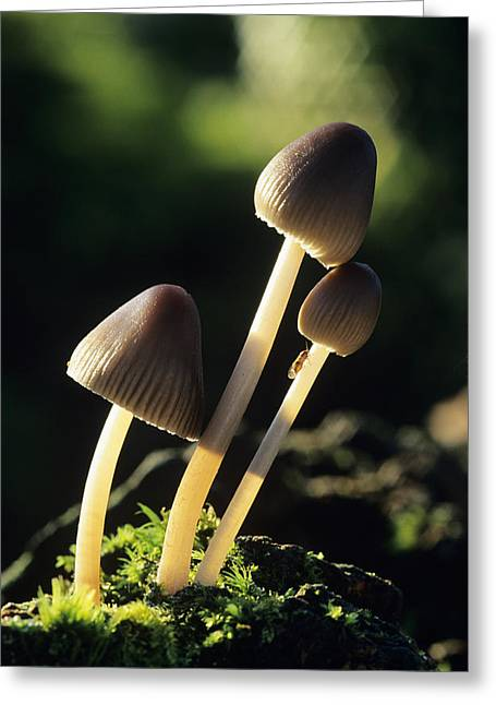 Toadstools Greeting Card by David Aubrey