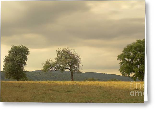 Hayrick Greeting Cards - Transilvania landscape Greeting Card by Odon Czintos