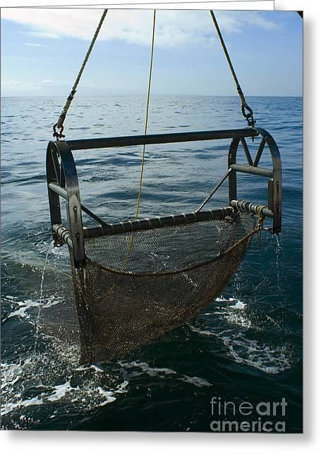 Sampling Greeting Cards - Trawling For Marine Life Greeting Card by Dante Fenolio