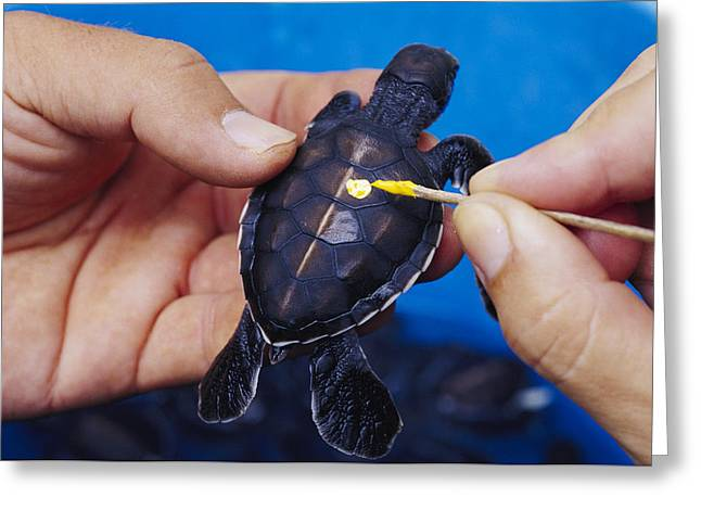 Rehabilitation Greeting Cards - Turtle Healthcare Greeting Card by Alexis Rosenfeld