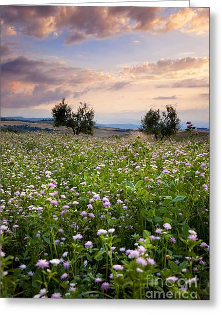 Tuscan Sunset Photographs Greeting Cards - Tuscany Greeting Card by Brian Jannsen