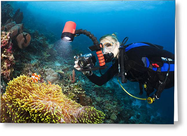 Pomacentridae Greeting Cards - Underwater Photography Greeting Card by Dave Fleetham - Printscapes
