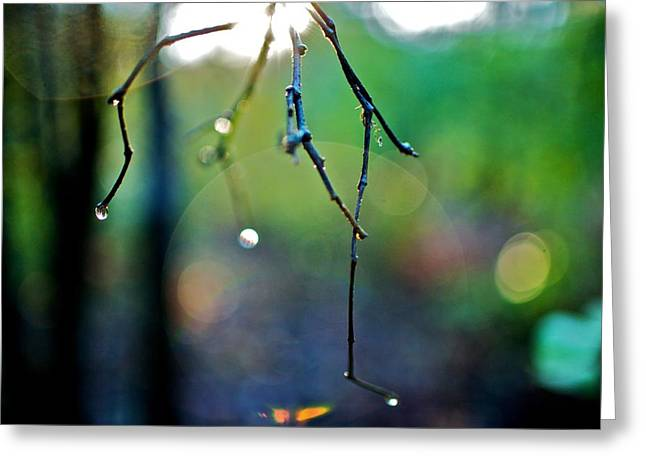 Bare Trees Greeting Cards - Untitled  Greeting Card by Jacob Messer