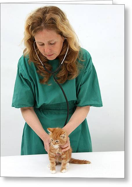 House Pet Greeting Cards - Vet Examining Kitten Greeting Card by Mark Taylor
